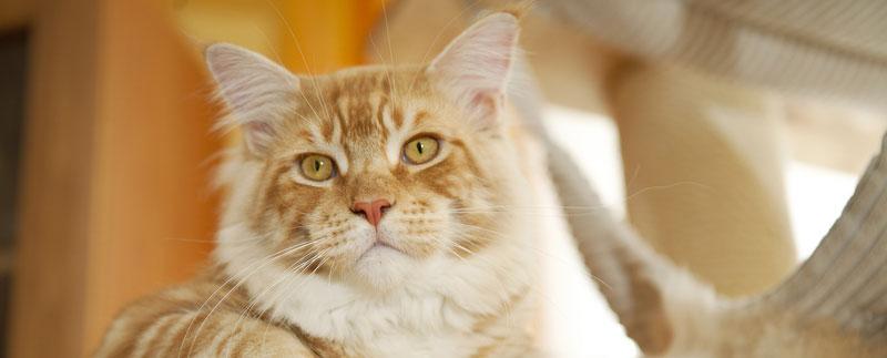 Om kattpensionatet